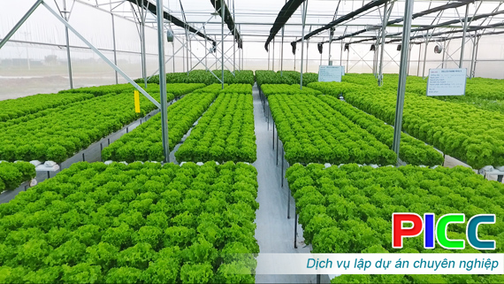 Đà Nẵng xây dựng vùng nông nghiệp ứng dụng công nghệ cao