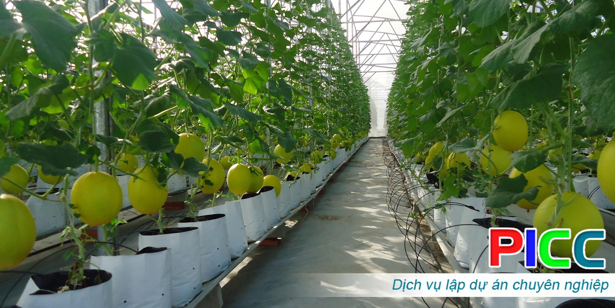 """Dự án """"Đầu tư nông nghiệp công nghệ cao """""""