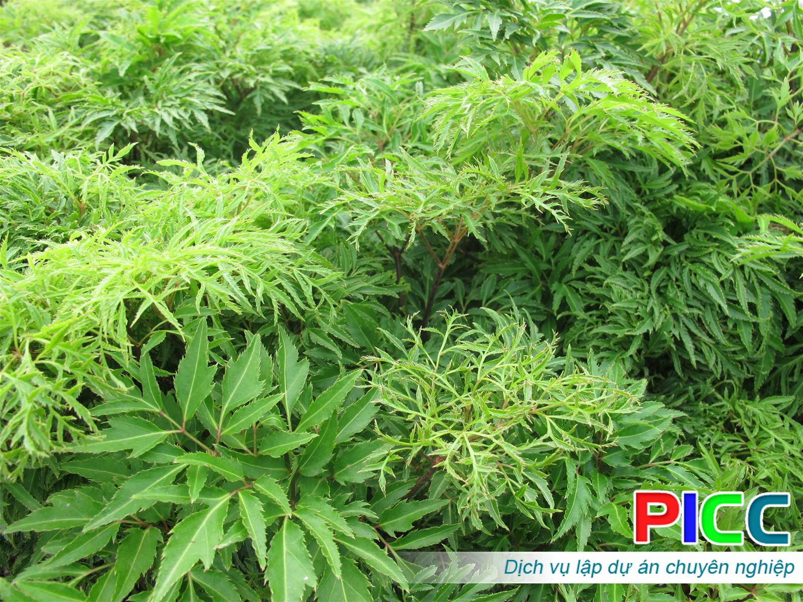 Dự án chăn nuôi dê kết hợp trồng cây dược liệu – tỉnh Điện Biên