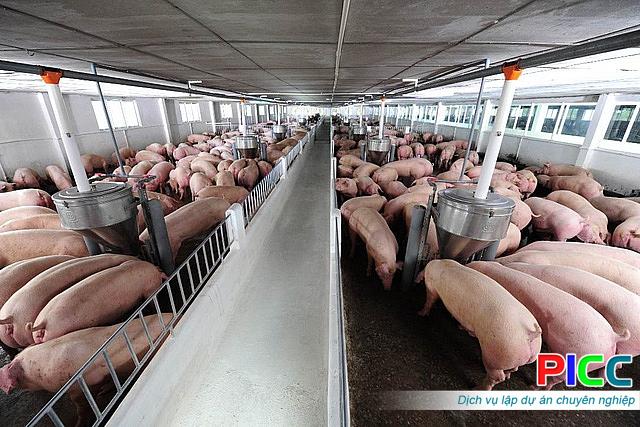 Dự án chăn nuôi heo tập trung tại An Giang