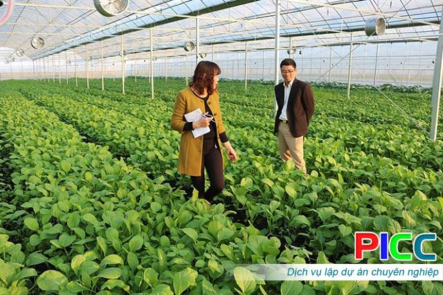Dự án đầu tư Sản xuất nông nghiệp công nghệ cao – Đắk Nông