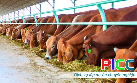 Dự án Đầu tư Trang trại nuôi bò sữa và Bò thịt