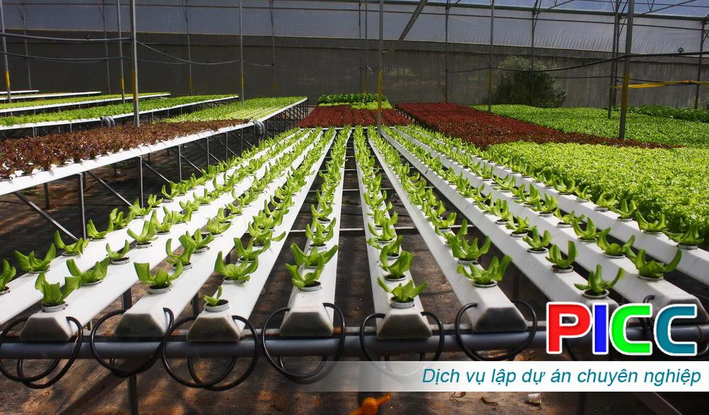 Dự án Đầu tư xây dựng mô hình sản xuất rau thủy canh công nghệ cao tỉnh Bà rịa – Vũng Tàu