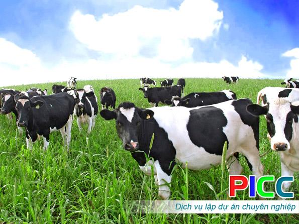 Dự án Nhập khẩu, chăn nuôi và cung ứng giống bò sữa, giống bò thịt