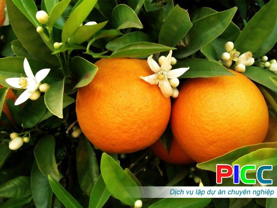 Dự án sản xuất giống một số cây ăn quả chủ lực – Bộ Nông nghiệp và PTNT