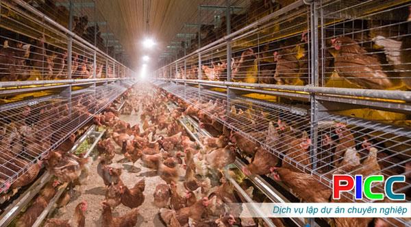 Dự án Trại gà hữu cơ tỉnh Bình Thuận