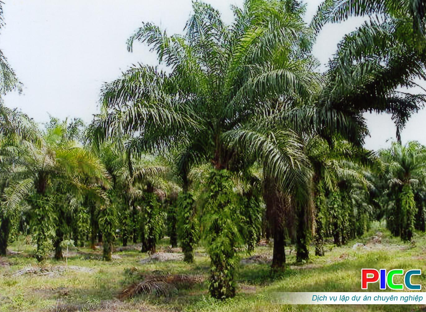 Dự án Trồng rừng và Cây cọ dầu tỉnh Bình Thuận