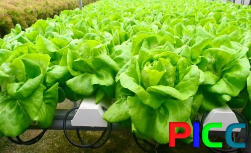 Dự án xây dựng khu sản xuất nông nghiệp công nghệ cao trong nhà mang và sản xuất rau hữu cơ