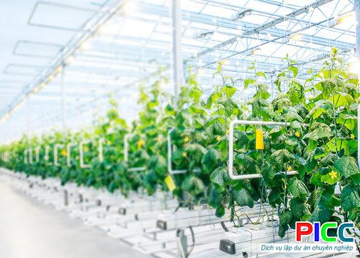 Dự án Xây dựng Nông nghiệp Ứng dụng Công nghệ cao Cư M