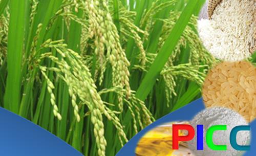 Lập dự án lúa gạo