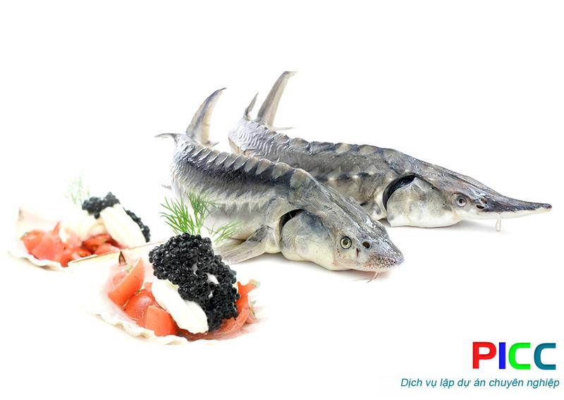 Mô hình Cá Tầm – Cá Hồi vân tại xã Tênh Phông, huyện Tuần Giáo, tỉnh Điện Biên