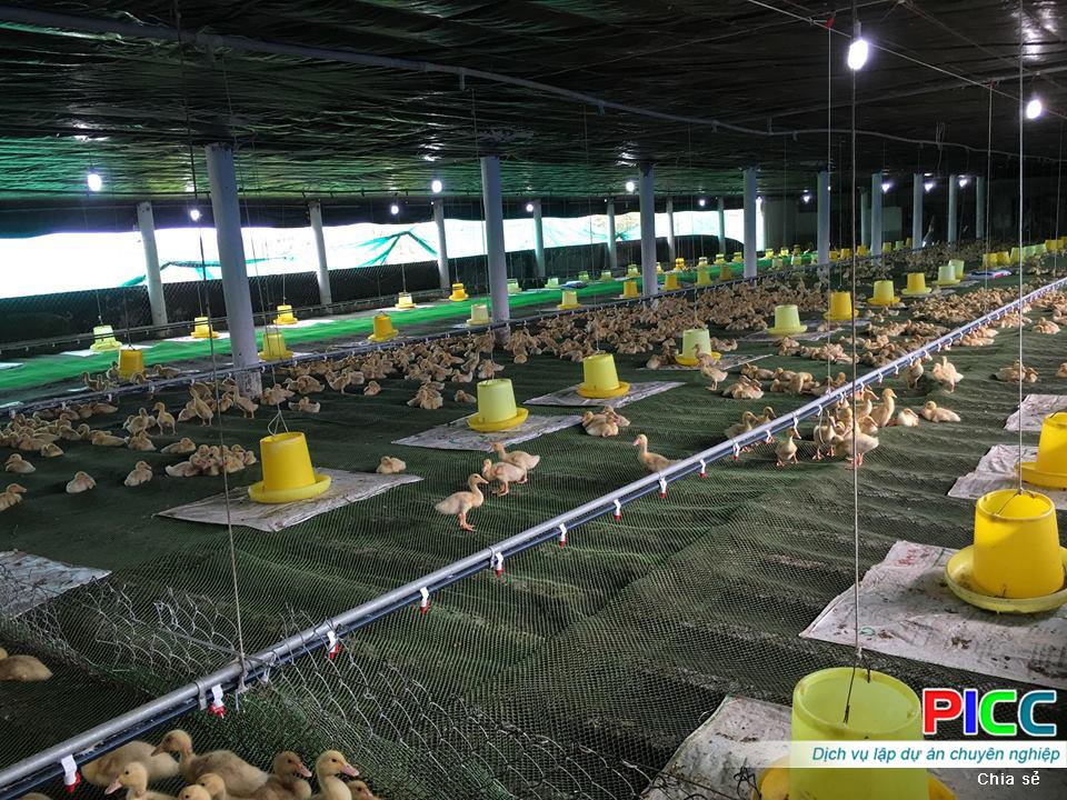 Mô hình chăn nuôi vịt thịt an toàn sinh học, thích ứng biến đổi khí hậu tỉnh Vĩnh Long