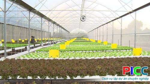 Mô hình: Sản xuất rau thủy canh công nghệ cao tại xã Xuân Tân, thị xã Long Khánh, tỉnh Đồng Nai
