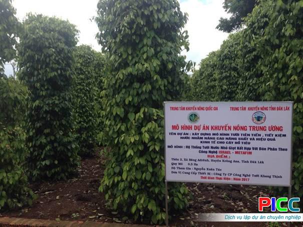 Mô hình tưới tiên tiến tiết kiệm nước cho cây hồ tiêu tại xã Băng Adrênh - huyện Krông Ana - tỉnh Đăk Lăk