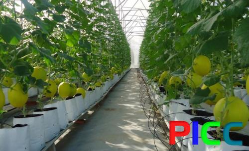 Nông nghiệp công nghệ cao Newtechco