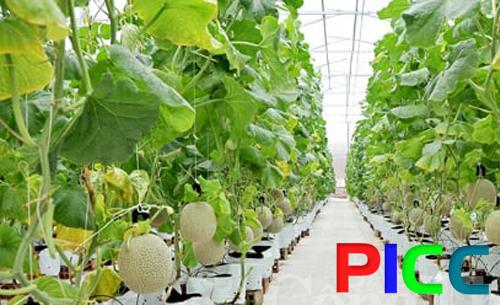 Nông nghiệp công nghệ cao Vietfarm