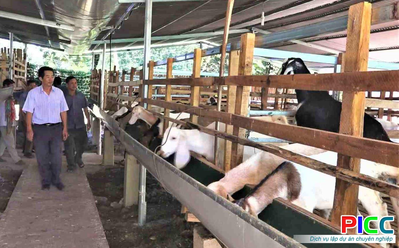 Nuôi dê thịt nhốt chuồng áp dụng CNC và trồng cây dược liệu tại Đà Nẵng