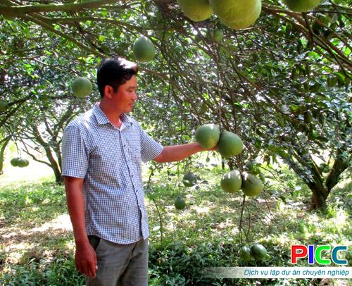 Phát triển cây có múi tại Hợp tác xã Cây ăn quả Tân Mỹ, huyện Bắc Tân Uyên, tỉnh Bình Dương