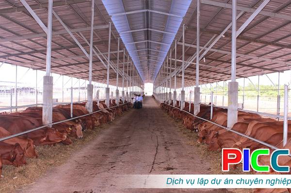 Phát triển vùng chăn nuôi bò thịt ứng dụng công nghệ cao tại tỉnh Long An
