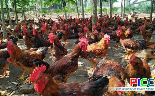 Phương án sản xuất mô hình chăn nuôi gia cầm ứng dụng Công nghệ cao tại Hà Nội