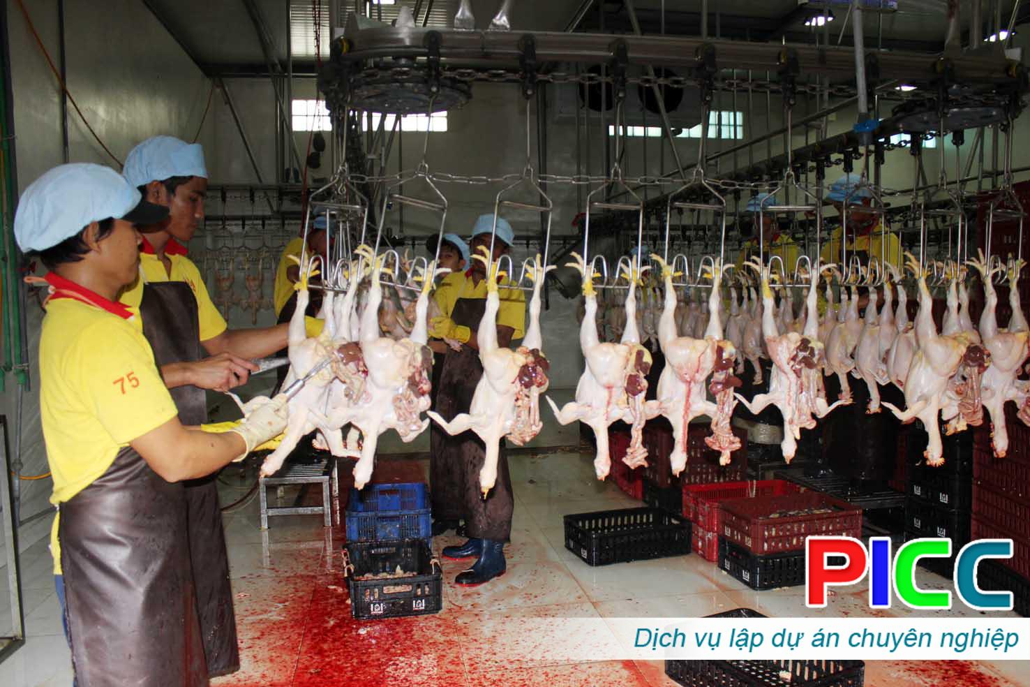 Quy hoạch chăn nuôi, giết mổ, chế biến và tiêu thụ gia cầm tập trung tỉnh Bình Phước 2006-2020