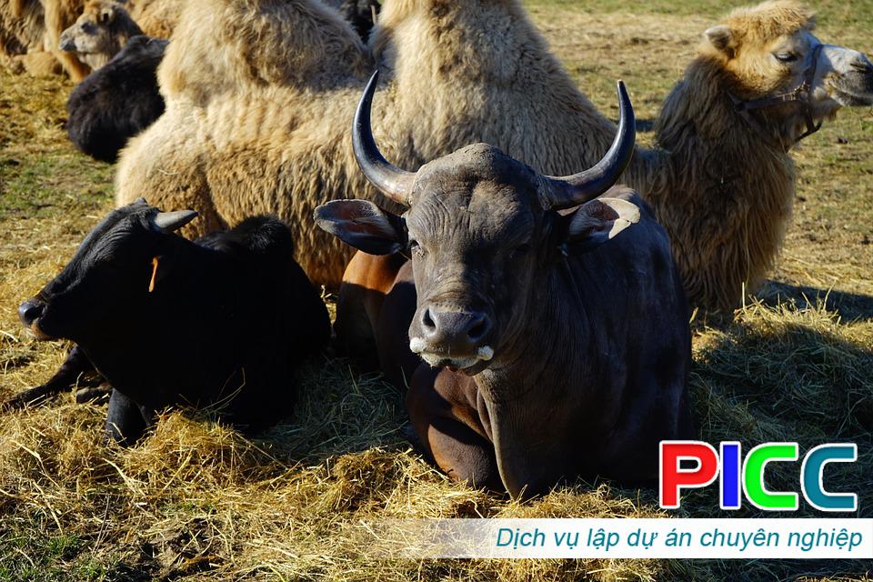 Quy hoạch đồng cỏ và vùng chăn nuôi gia súc có sừng tỉnh Ninh Thuận