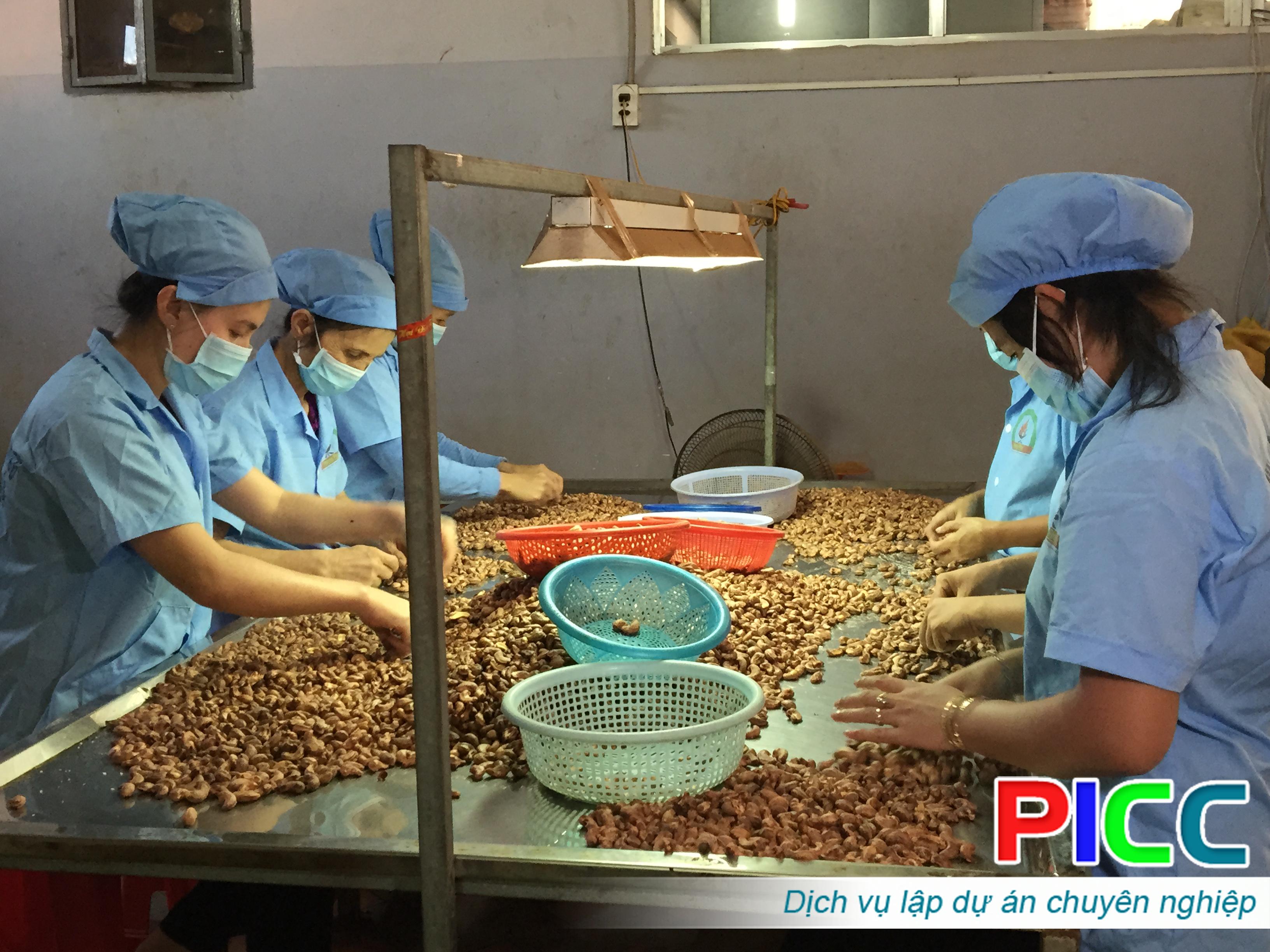 Quy hoạch ngành công nghiệp chế biến điều tỉnh Bình Phước đến năm 2025
