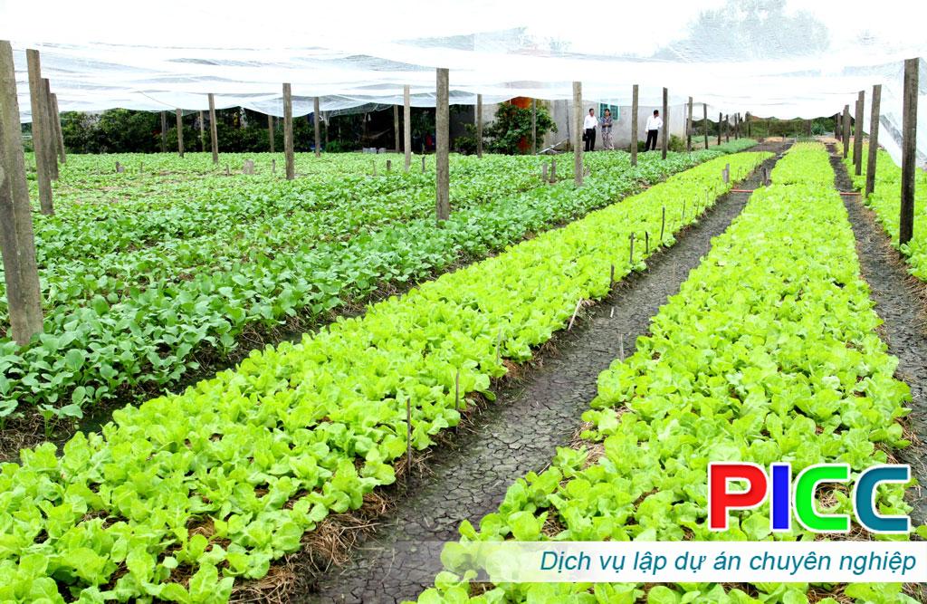 Quy hoạch vùng sản xuất rau an toàn tỉnh Ninh Thuận
