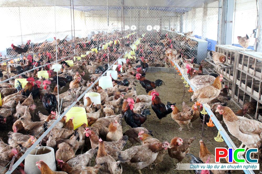 Trại gà hữu cơ tỉnh Bình Thuận