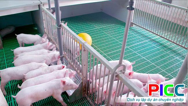 Trang trại chăn nuôi heo thịt tỉnh Vĩnh Phúc