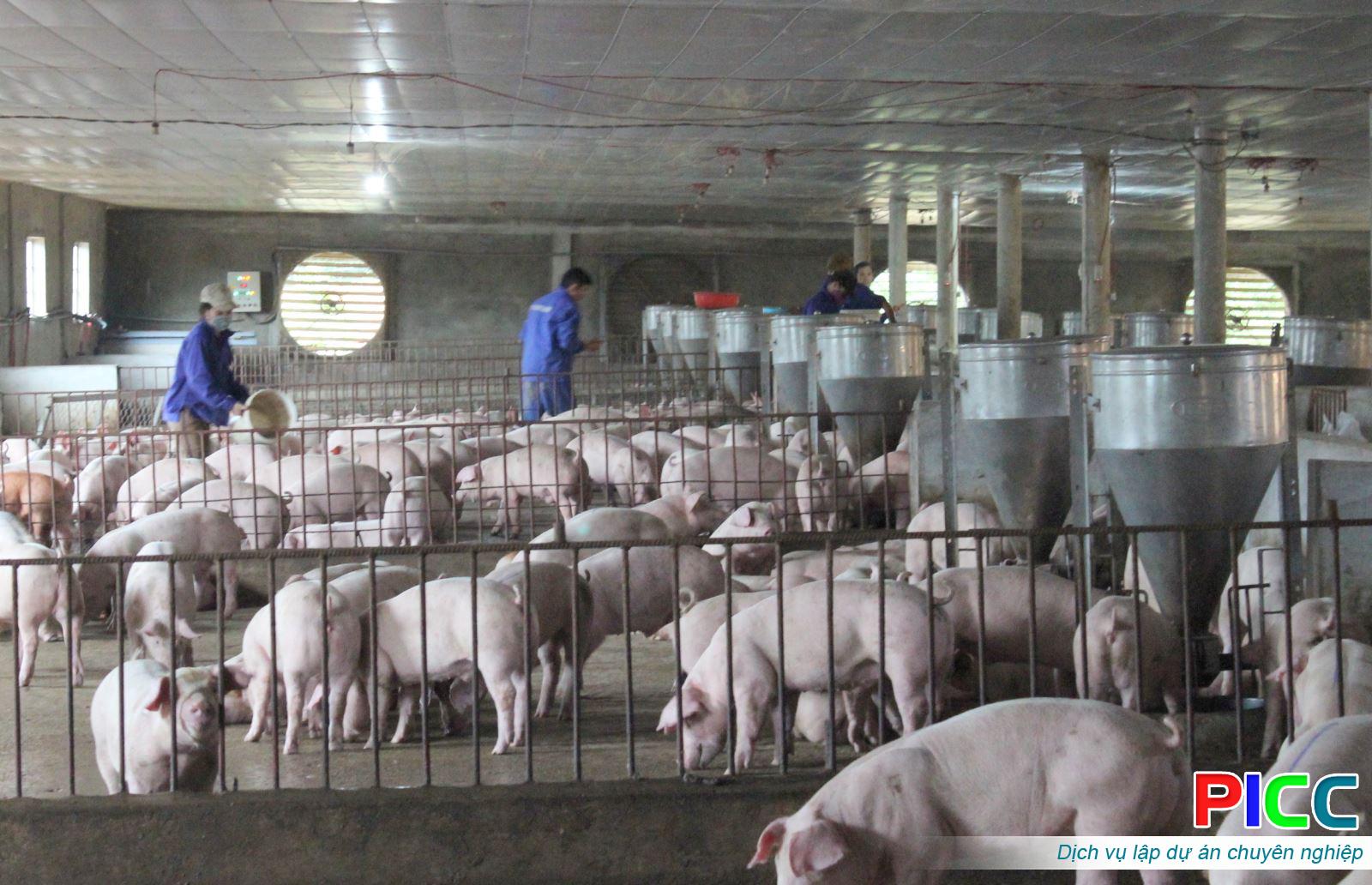 Trang trại Tổ hợp chăn nuôi gia súc theo hướng công nghiệp sạch