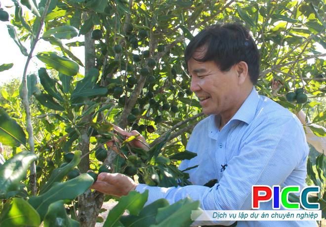 Triển vọng lớn từ cây mắc ca ở huyện vùng cao Sơn Tây