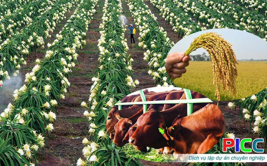 Trồng thanh long kết hợp sản xuất lúa và chăn nuôi tỉnh Bình Thuận