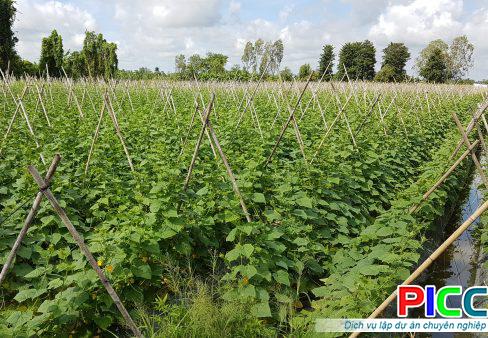 Ứng dụng khoa học công nghệ phát triển vùng nguyên liệu nông sản đạt chất lượng cao tỉnh Tiền Giang