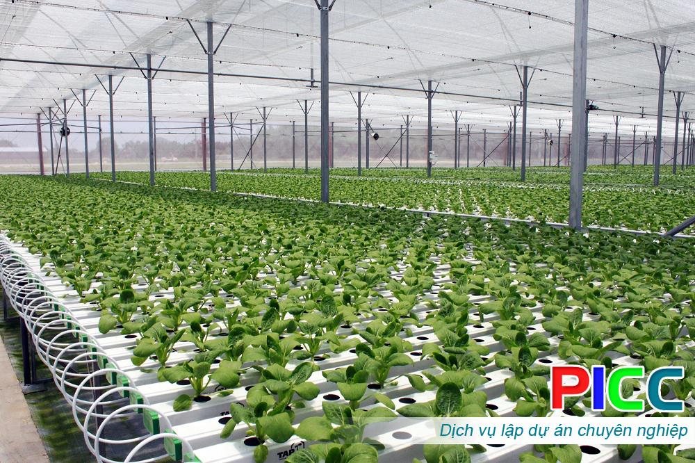 Xây dựng khu Nông nghiệp công nghệ cao trong nhà màng và sản xuất rau hữu cơ tỉnh Tiền Giang